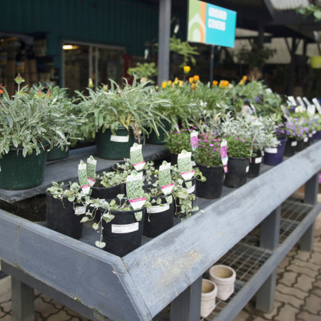Drysdale Home Timber & Hardware plant nursery