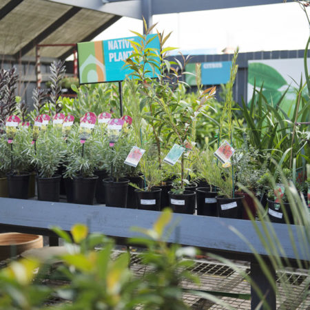 Native plants available at Drysdale Home Timber & Hardware