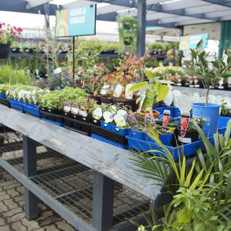Plant nursery, Drysdale