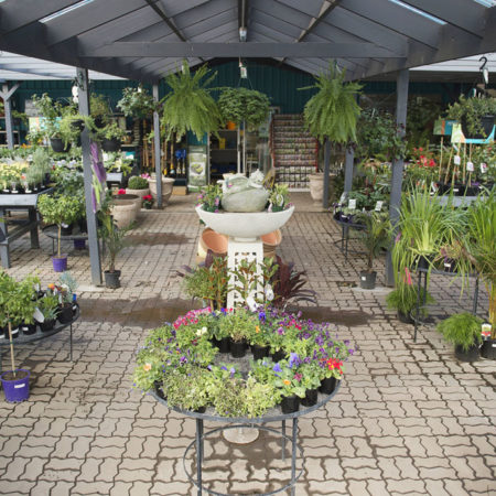 Plant nursery at Drysdale Home Timber & Hardware
