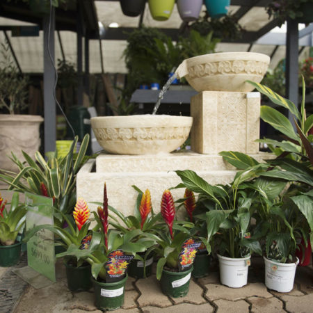 Plants at Drysdale plant nursery