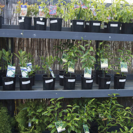 Plants for sale at Drysdale Home Timber & Hardware