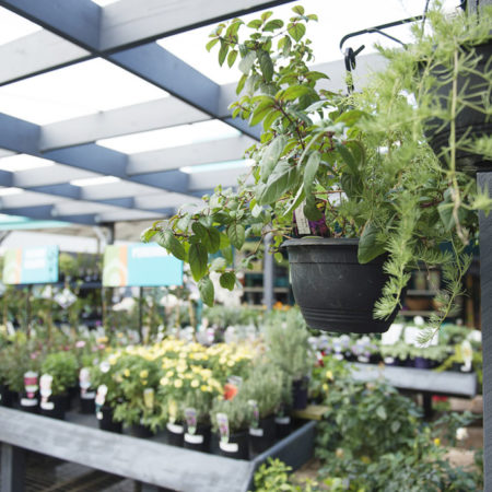 Plants, Drysdale