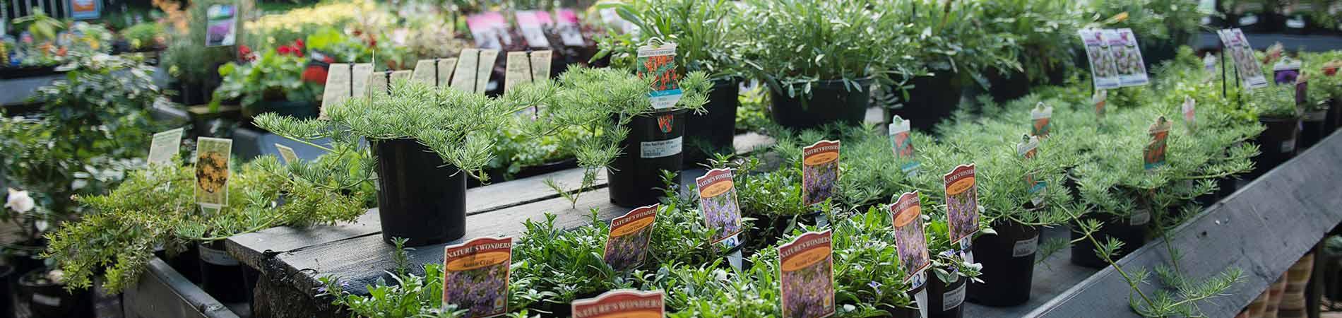 Drysdale Plant Nursery